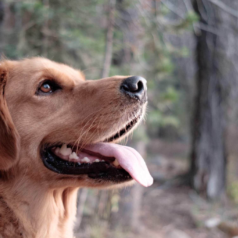 Respeito, empatia & justiça - Pelos animais de Sto. Tirso