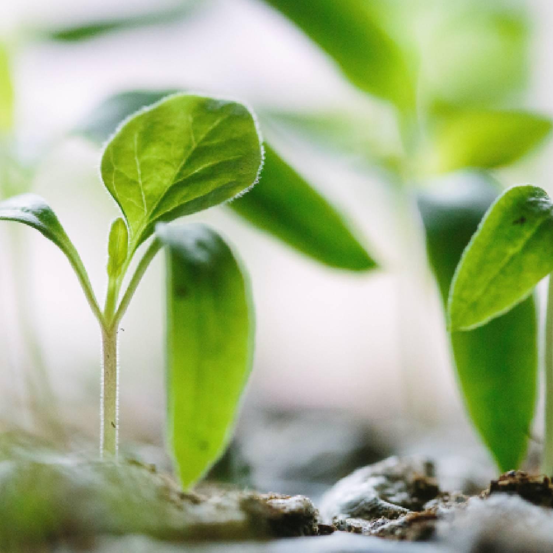 Dia da Terra 🌍 O nosso top 5 de marcas sustentáveis!